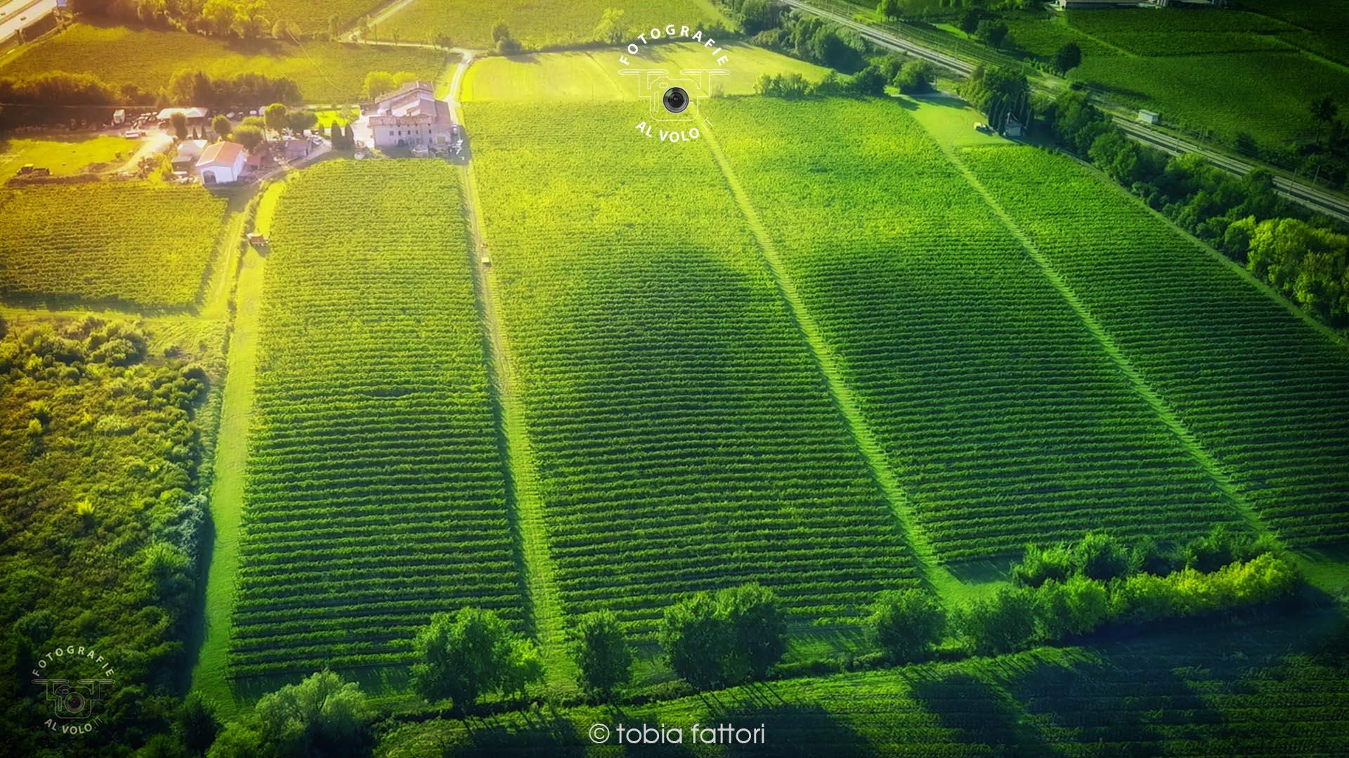 Fotografie Al Volo! Riprese aeree con drone - Vendemmia Vino Lugana - Tobia Fattori